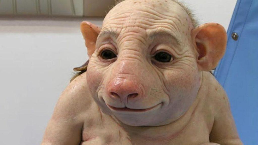 Porcul om sau omul porc